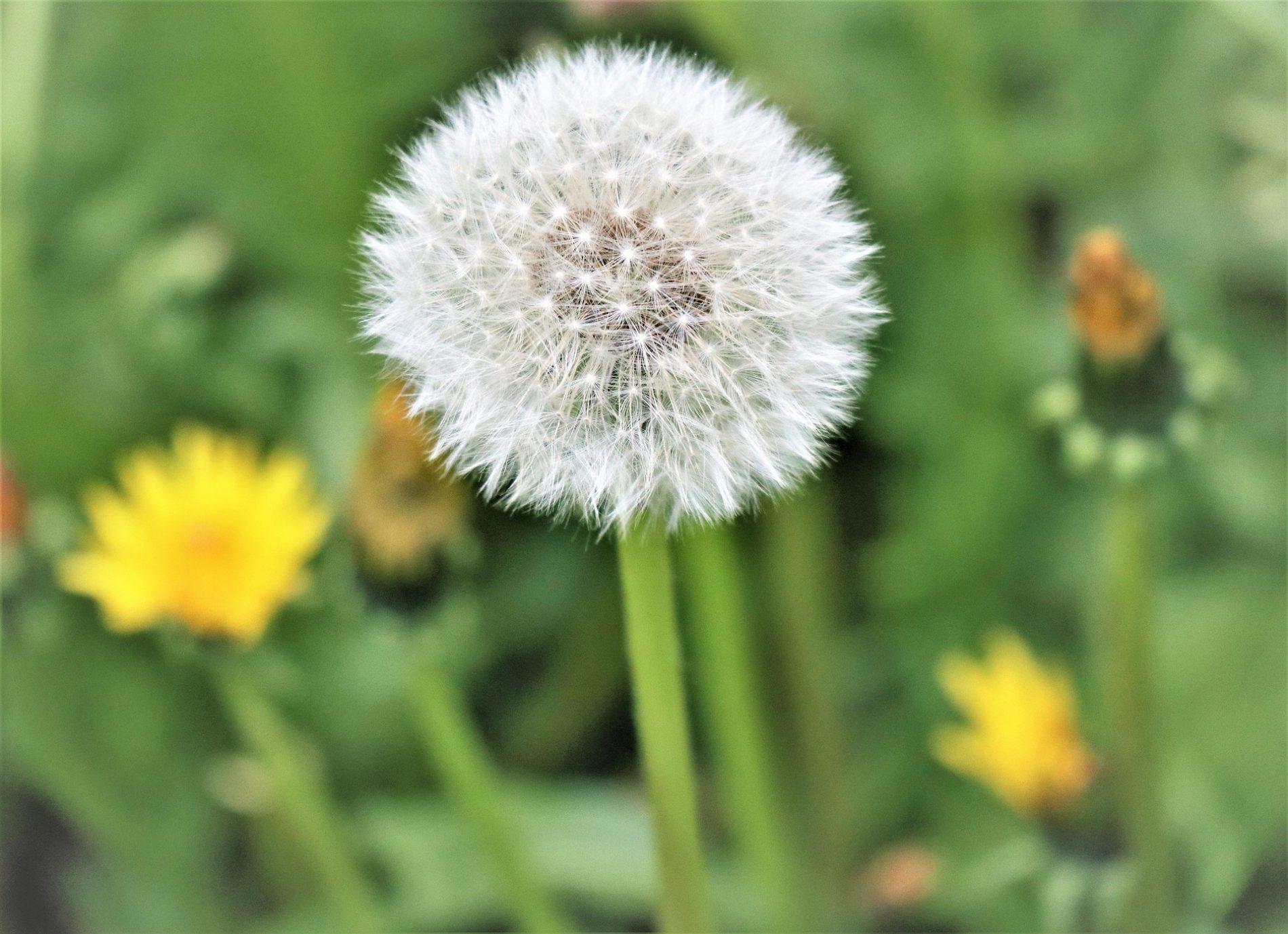 dziecięca alergia